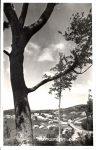 Képeslap-Mátraszentimre-Sztanek Ede-Forte-1950